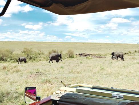 Serengeti Tanzânia