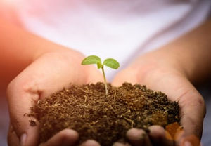 woman-hand-holding-young-baby-tree-with-soil-background_53476-1964-e1558485137595_edited.jpg