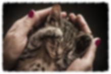 Kitten receiving animal Reiki