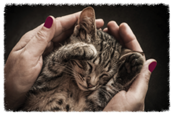 Kitten receiving animal Reiki