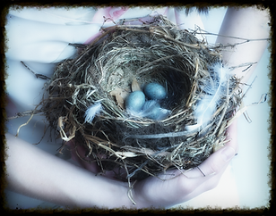 Someone holding a nest in their hands