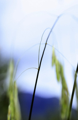 Grass Mount K
