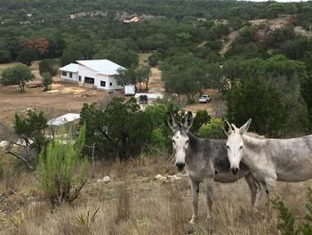 Diane Lohman Home Design-Texas Hill Country