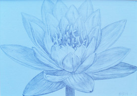 Lotus-Silverpoint-drawing-Bonnie-Hautama