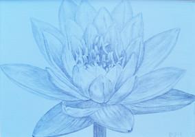 Lotus-Silverpoint-drawing-Bonnie-Hautama