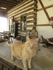 Diane Lohman Home Design-Reclaimed Antique Tobacco Barn