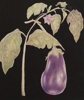 Pat-Pilkington-Botancial-Illustration.jp