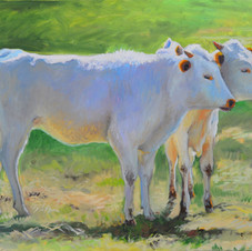Troy's Calves
