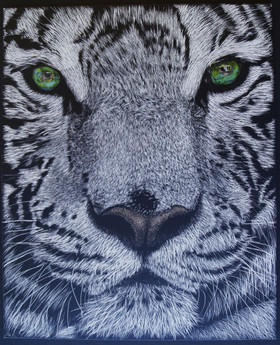 Black-and-White-Tiger-Amy.jpg