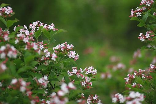 flowers-3324689_640.jpg