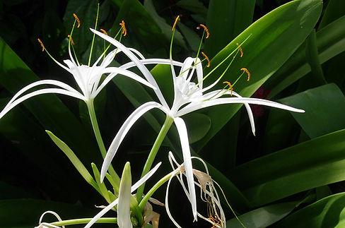 flower-5472495_640.jpg