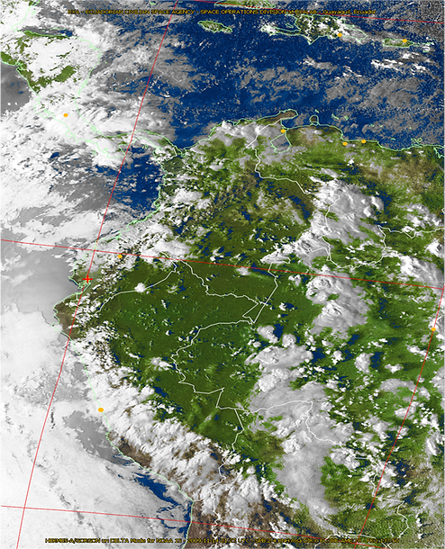 Weather image showing vegetation
