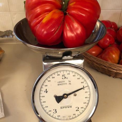 SAINT-LEONARD RESIDENT GROWS HUGE TOMATO (AUGUST 24 2020)