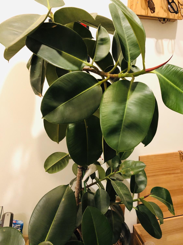 小さな植物から大きな植物へ伸びる力