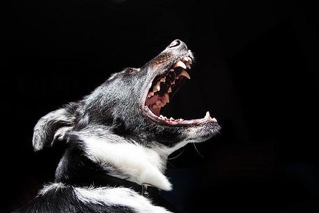Eden Dog Academy Guelph Trainer
