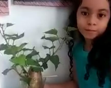 Ester batata.PNG