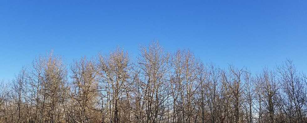 Winter Trees_edited_edited.jpg