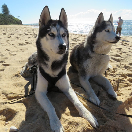 The Sunshine Coast, Queensland dog friendly beaches
