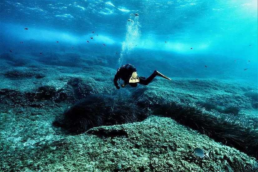 PADI Self-Reliant Diver