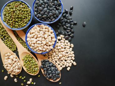 Fiber & Protein Charts