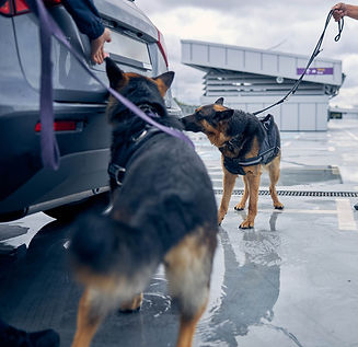 MIDLEA BOMB DOG CHICAGO EXPLOSIVE DETECTION CANINE K9 K-9 MIDLEA CHICAGO ILLINOIS CANINE K9 K-9 SERVICES MIDLEA WISCONSIN CANINE K9 K-9 SECURITY COMPANY