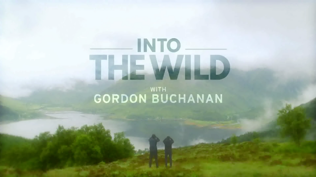 Into The Wild with Gordon Buchanan.png