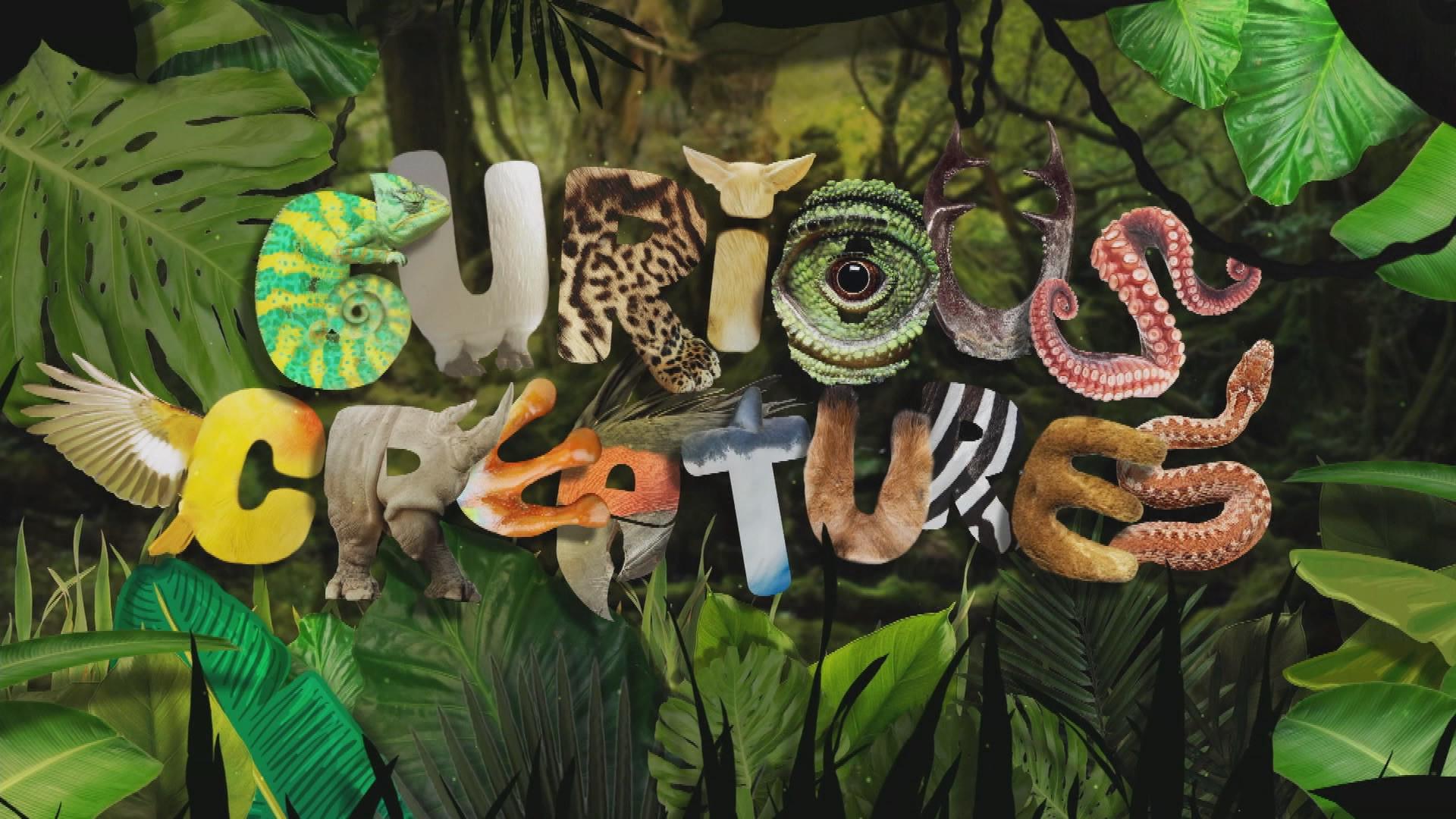 CURIOUS CREATURES SERIES 2 - UK TX TITLE