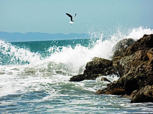 Seagull on Seabreak