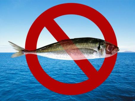 FDA Halts Imports of Farmed Fish From China