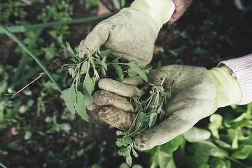 gardening-2518377_1920.jpg