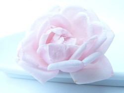 rose-91075__340