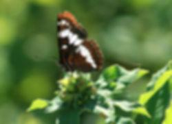 butterfly final copy2.jpg