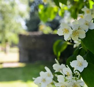 gardens-2.webp