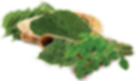 kisspng-drumstick-tree-jojoba-liquid-imp