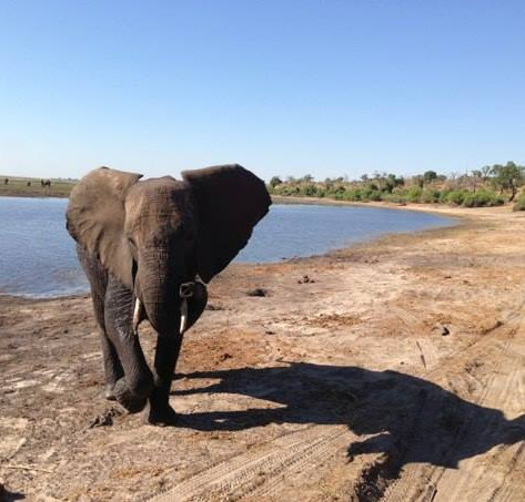 DESTINATION:  A Tale of Three Boats - Chobe National Park