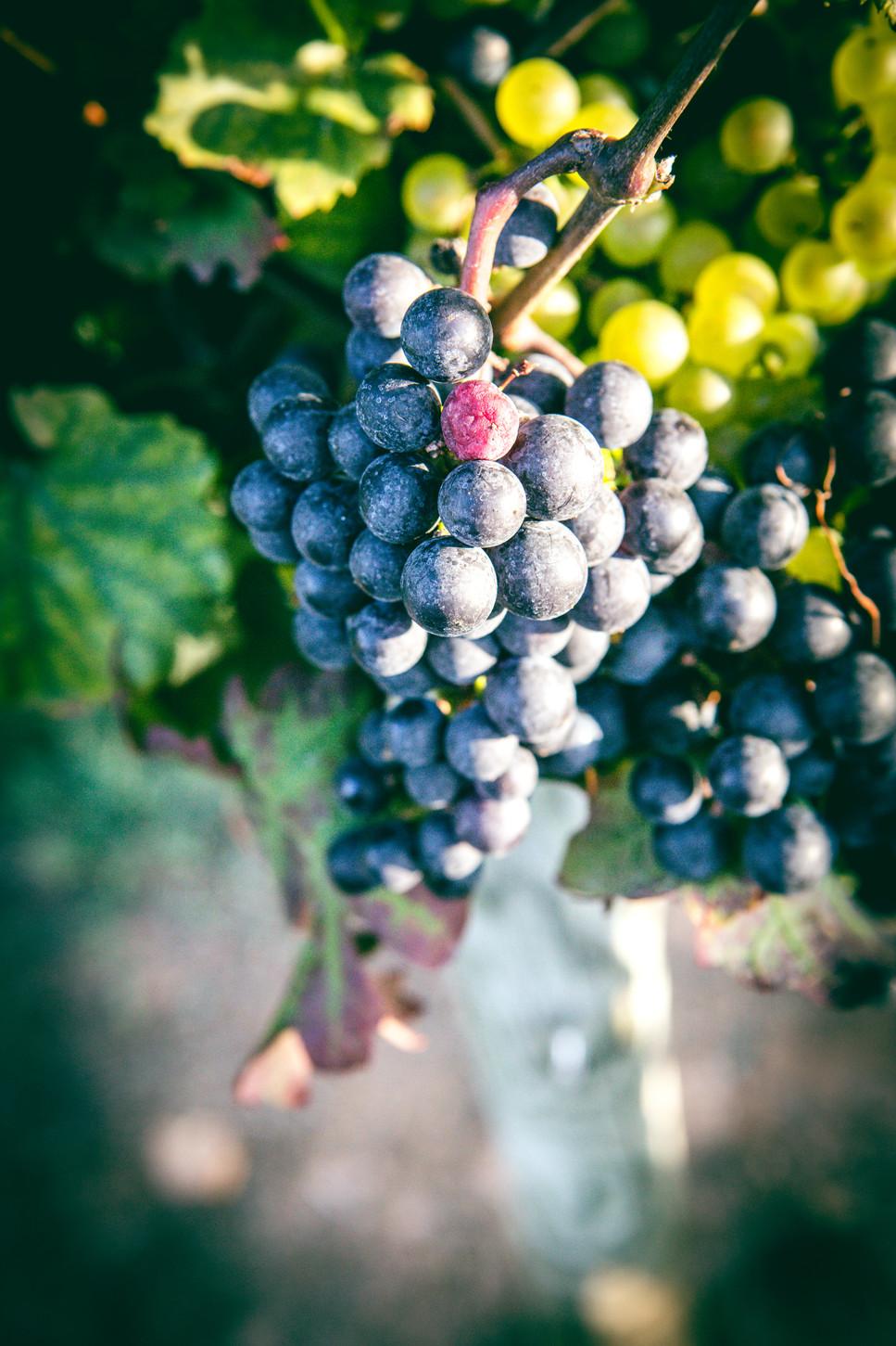 Vineyards-17.jpg