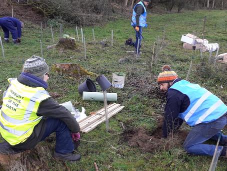 Hungerford Marsh Lockdown Wood Planted