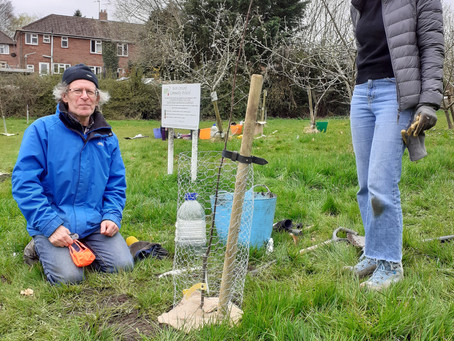 Orchard Extension with Growing Newbury Green Goes Ahead