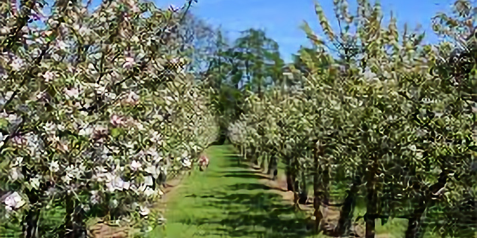 Barn Crescent Orchard Planting Event 10am-12pm