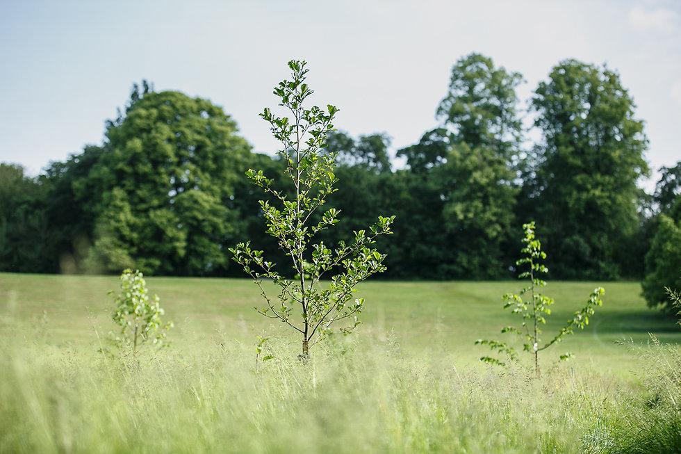 20210615 - Goldwell Park Lockdown Woods - 058.jpg