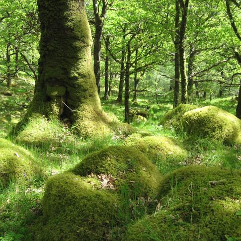 The Lockdown Wood