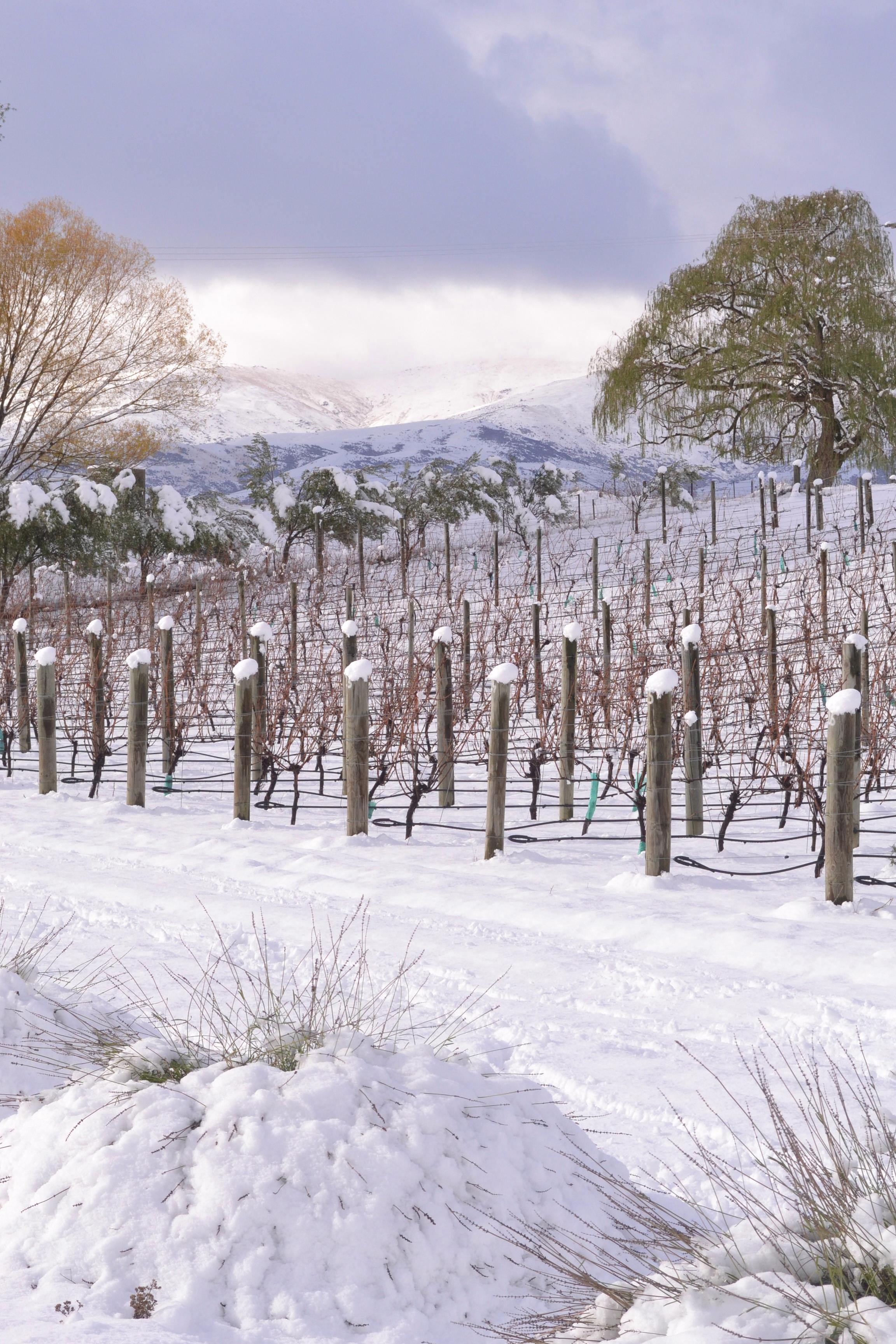 winter:house:vineyard vol. 2.png