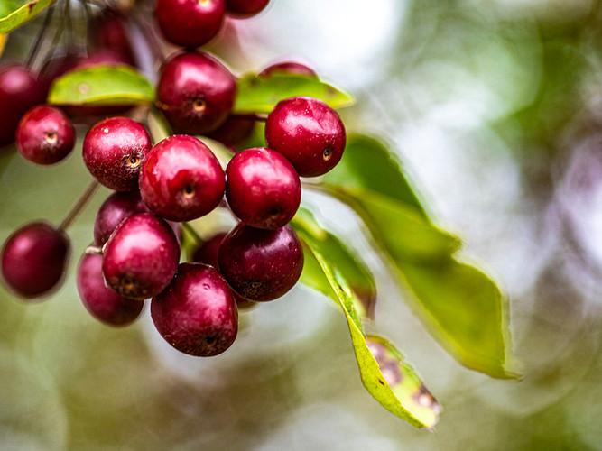 Berries on Bokah Background_Paula Frizzo