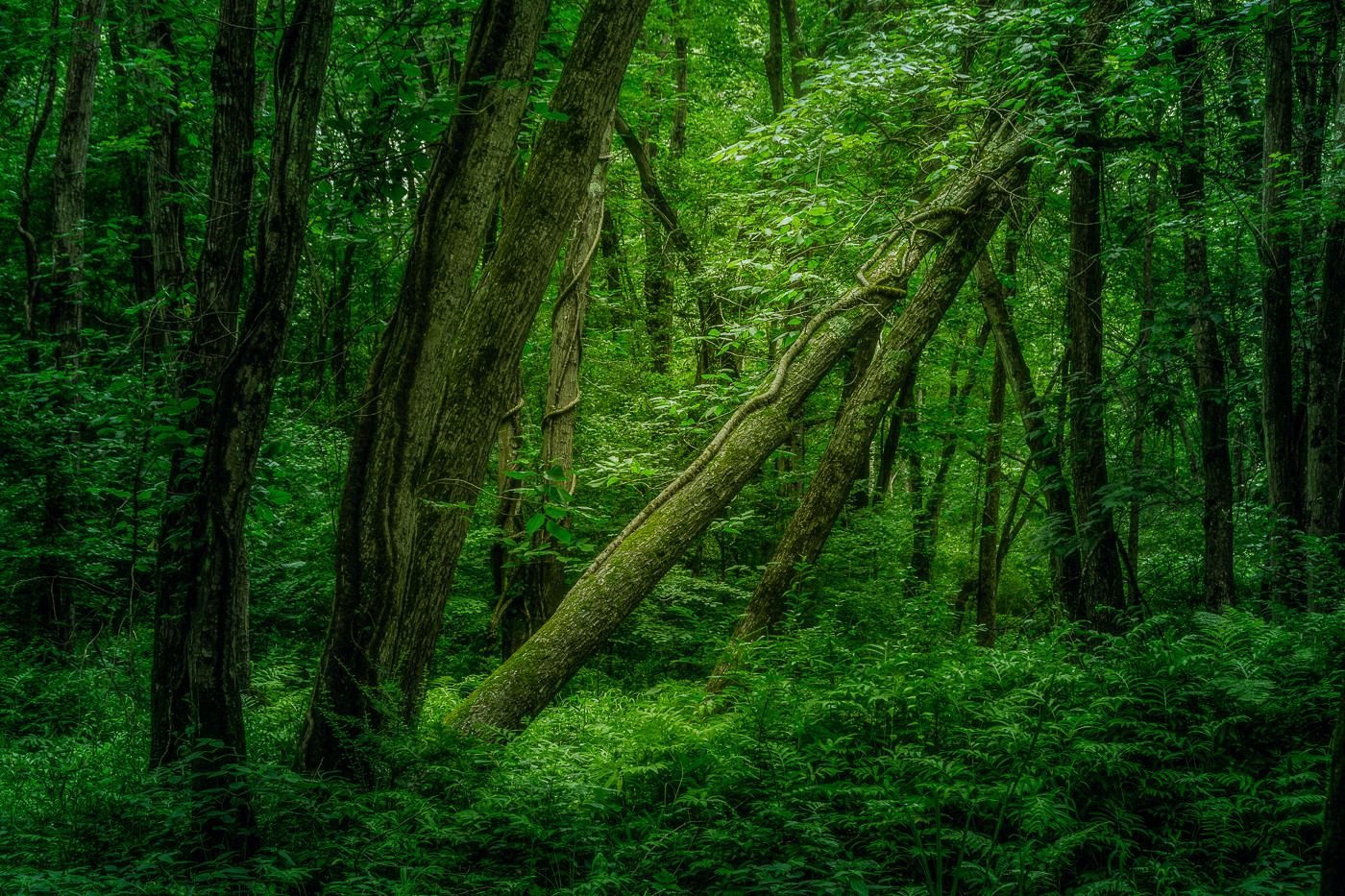 Enchanted Forest_First Place_First Place