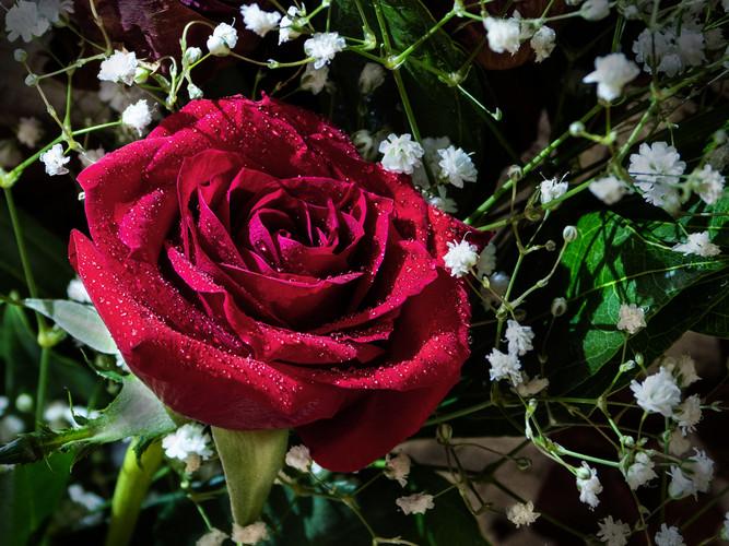 Perfect Rose_Linda Gargano_21.jpg