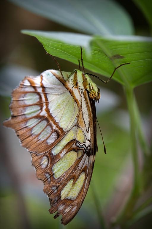 Lori Malinski, Magic Wings, _MG_1842 Low