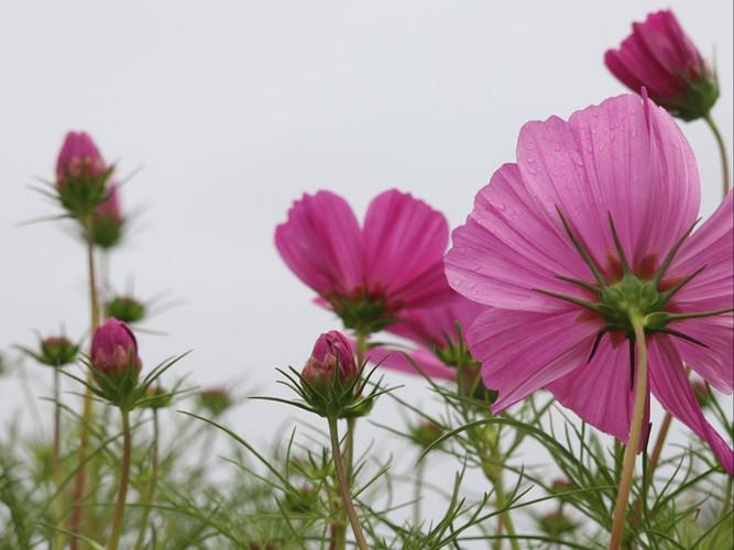 As the Flowers Look Forward_Janet Cosgro