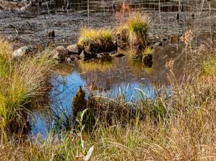 Bog Pond @ White Memorial - Mike Schulde