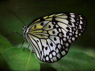 Tom Malinski, Magic Wings, 12-03-31_1447