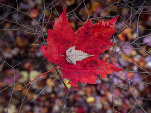 Leaves and Mesh_Fred Tullock_Honorable M